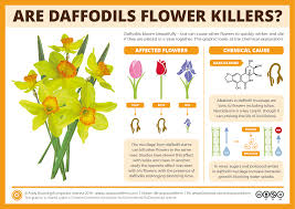 daffodils do they kill other flowers