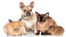 Afbeeldingsresultaat voor huisdieren samen
