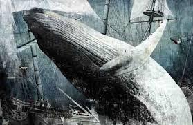 Resultado de imagen para ballena blanca imagenes