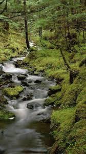 Full HD Beautiful Amazing Rain Nature Cool Forest Backgrounds