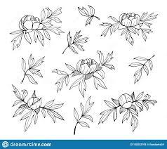 цветки бутоны и листья пиона выравнивают Monochrome иллюстрацию