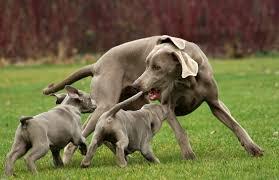 educazione cucciolo, comprare cucciolo, puppyclass