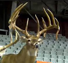 Deer Movement Charts For Arkansas Is This Gagger Monster Buck The New State Record