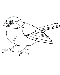 Bird Coloring Page Printable Realistic Bird Coloring Pages