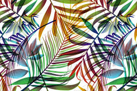 Colorful Patterns Delectable Tropical Colorful Palm Jungle Leaves Graphic Patterns Creative