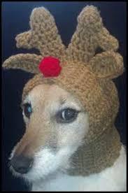 Crochet Dog Hat Pattern Interesting Crochet Dog Hat Pattern Ideas Best Collection Knitcrochet For Fur