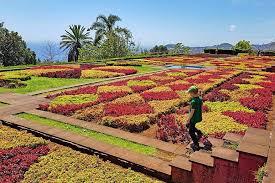 madeira botanical garden jardim botanico is one of the most beautiful gardens of funchal