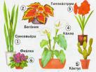 комнатные растения 2 класс окружающий мир презентация