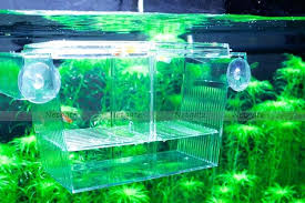 aquarium tank divider size x x fish tank divider suction cup aquarium tank divider aquarium divider gallon gallon fish