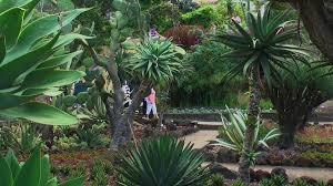 madeira botanical garden 18 3d photo images