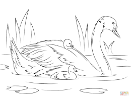 Small Picture Swans coloring pages Free Coloring Pages