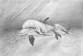 эскизы тату дельфин клуб татуировки фото тату значения эскизы