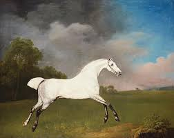 white painting a grey horse by george stubbs
