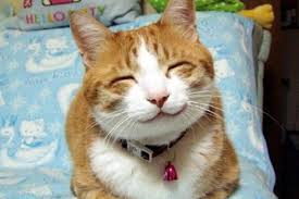 Image result for cat expressions