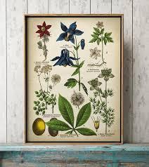 Botanical Chart Print Botanical Poster Plants And Flowers Print Botanical Print Botanical Chart Pasqueflower European Columbine Wood Anemone Windflower