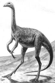 featherless ostrich.  Ostrich Struthiomimus With Featherless Ostrich A