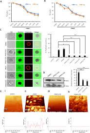 Supression Of Perforin Like Protein Pores Inhibit Plasmodium