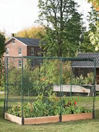 garden enclosure. Assembled 4 F X 8 Cedar Raised Bed With Netting Enclosure Planted Vegtables. Vegetable Garden D