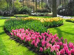 flowers for garden. Flowers For Garden 131 High Resolution Wallpaper P