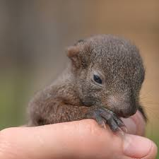 How To Care For A Baby Squirrel Everything You Ever Wanted
