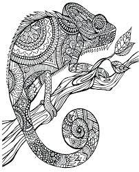 3 Chameleon Drawing Chameleon Marker For Free Download On Ayoqqorg