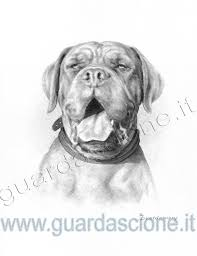 Disegni Di Cani Eseguiti Da Foto Ritratti Di Cani Disegnati A