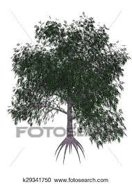 pecan tree clip art. Fine Tree Stock Illustration  Pecan Tree 3D Render Fotosearch Search Clipart  Posters To Tree Clip Art R