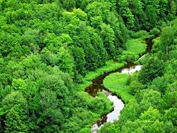 wallpaper hd 1080p nature green. Delighful Nature Hd Wallpaper Widescreen Green Nature Wallpapers Inside 1080p W