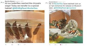 in the time of the butterflies nea two screenshots from massillon museum twitter first shows five butterflies at the chrysalis stage
