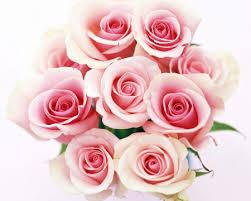 Mazzo rose rosa - Fiori a Gorizia consegna a domicilio
