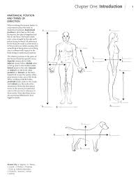 Anatomy Coloring Book Free Horse Anatomy Coloring Book Additional ...