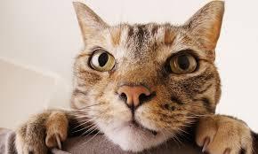 Αποτέλεσμα εικόνας για gata