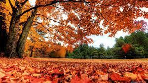 Autumn desktop wallpapers 4K Ultra HD