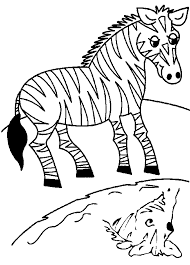 Small Picture Animal Preschool Coloring Pages Zebra Animal Coloring pages of