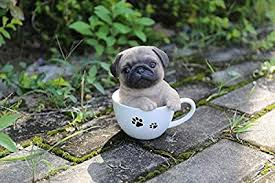 pug puppies. Wonderful Puppies Pet Pals  Teacup Pug Puppy And Puppies P