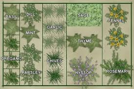 Garden Layout Template Vegetable Garden Layout Template Culinary Herb Garden Plan