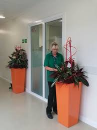 office plant displays. Wonderful Office Our Allinclusive Routine Maintenance Servicing Ensures You Reap The  Benefits Of Plants In Your Office And Includes Intended Office Plant Displays G