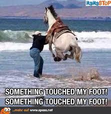 ängstliches Pferdchen Lustige Bilder Auf Spassnet