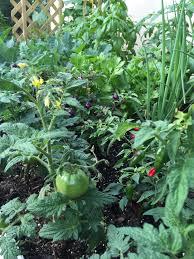 florida vegetable gardening. South Florida Vegetable Garden Gardening S