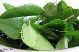 Barbata myers.) tanaman merambat, daun berwarna hijau pucat dengan rambut di atas permukaannya. Pin On Healthy Food