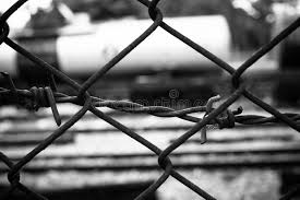 barbed wire fence prison. Download Barbed Wire Fence. Prison Fence In Black And White Closeup. Stock Image - S