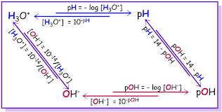 Experiment 13 Ph And Its Relationship To Acids And Bases