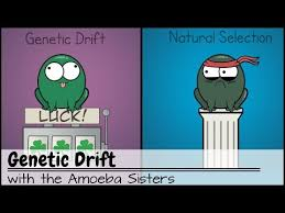 More videos from channel amoeba sisters >>>. 20 Genetic Drift Youtube Cset Science Subtest Ii Life Science Smr 4 2d Genetic Drift Biology Textbook Life Science