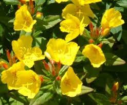 Best Yellow And Orange Flowers Images On Pinterest Orange