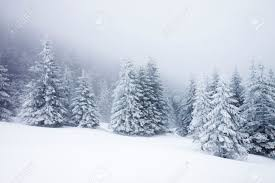 Christmas Background With Snowy Fir Trees Stock Photo, Picture And ...