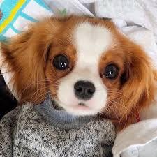 such a cute puppy 9
