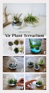 diy plant decor air plant terrarium ideas airpl on plant crafts ideas macrame hang