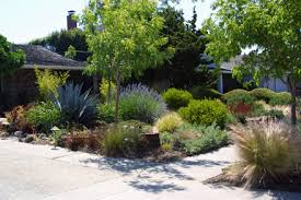 Small Picture Sustainable Low Water Garden Design in San Jose California