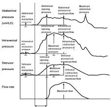Bladder Urogynaecology Prolapse Glossary