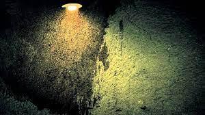 Fireflies FREE Video Background Loop HD ...